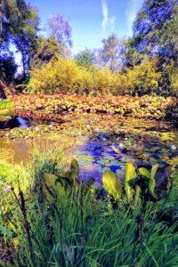 Inverewe Garden pond