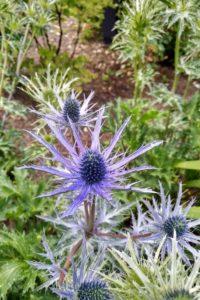 Inverewe Garden (NTS)