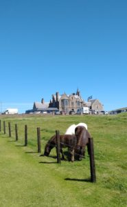 Shetland ponies in front of the Sumburgh Hotel - Shetland