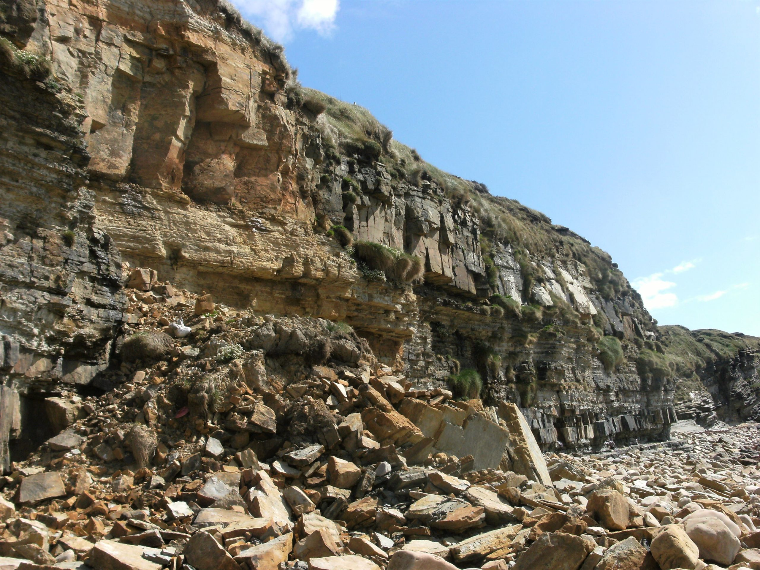 Orkney's crumbling cliffs (photograph by Marita Lueck)