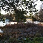 urban environment pond and trees